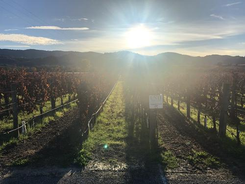 Wine Country Immersion. Healdsberg, CA